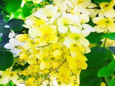 400flower26.jpg